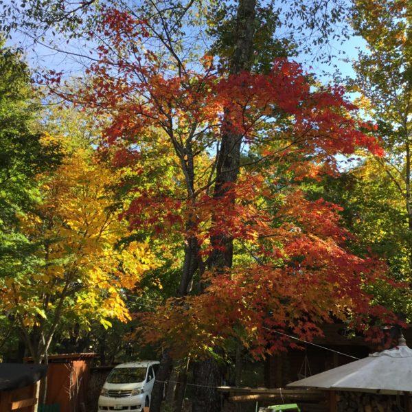 お庭の紅葉も🍁見頃となってきました😃 サムネイル